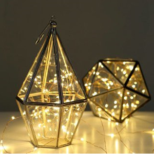 5m 50 LED String Seed Lights